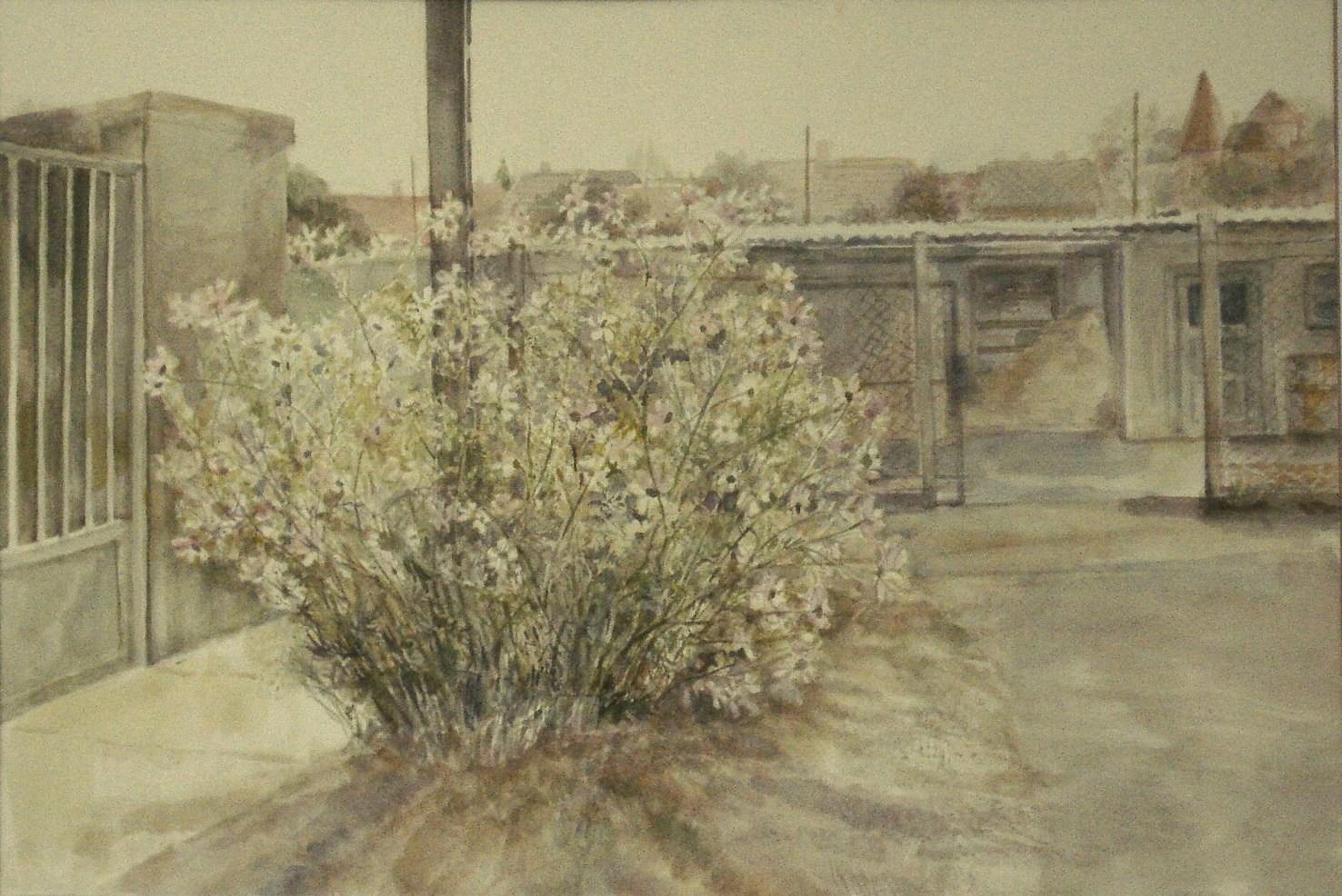 Szakáll Ágnes - Lepkevirág
